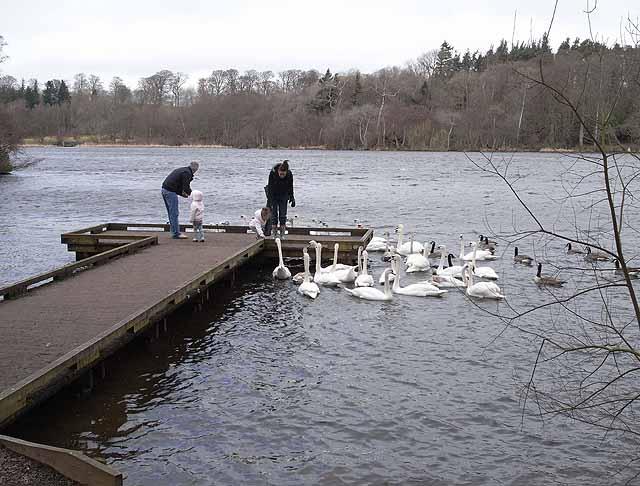Feeding time at Bolam Lake