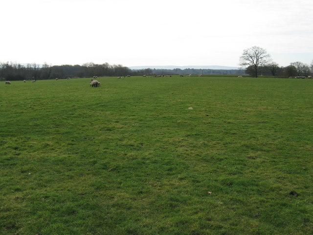 Weald Way crossing field