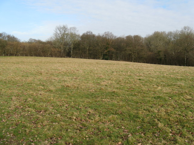 Decoypond Wood