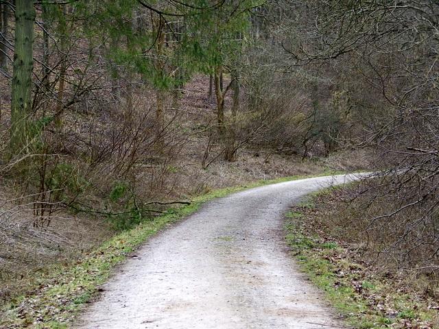 Track, Balfour's Wood