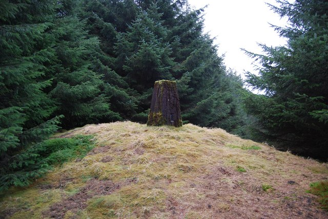 Fingland Fell trig point inside forest