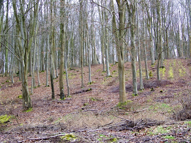 Trees, Washers Pit Coppice