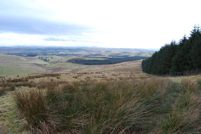 Sheepwalk and forest edge from top of Gudewifes Hill