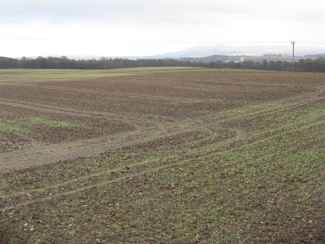 Winter wheat near Niddry Castle