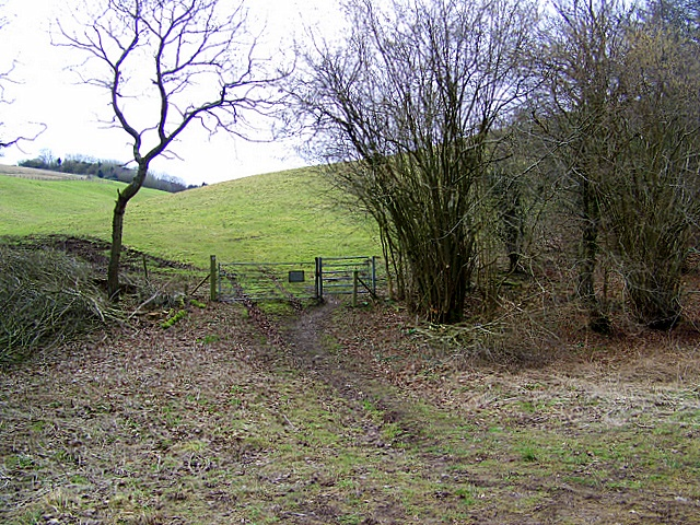 Bridleway to Freak's Coppice
