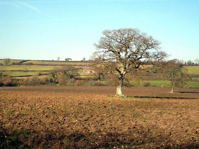 Ploughed Field below Broad Hill Farm