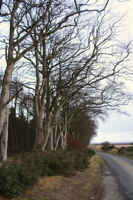 Edge of Kinghorn Wood