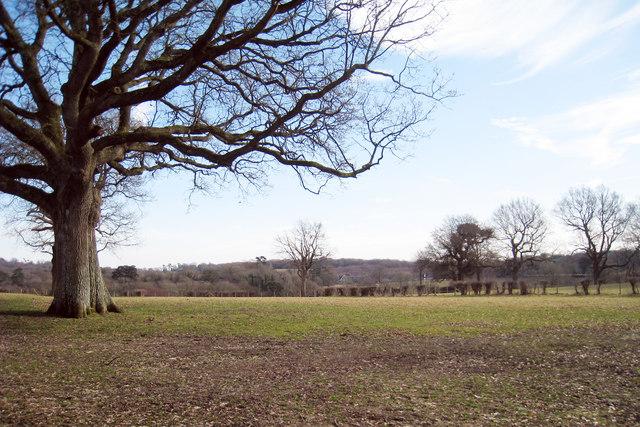 Field near Baldwin's Farm