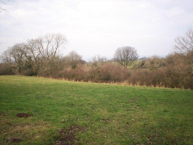 Field, Ciffig