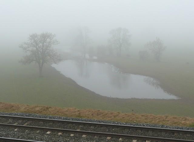 Pond on the flood plain in fog