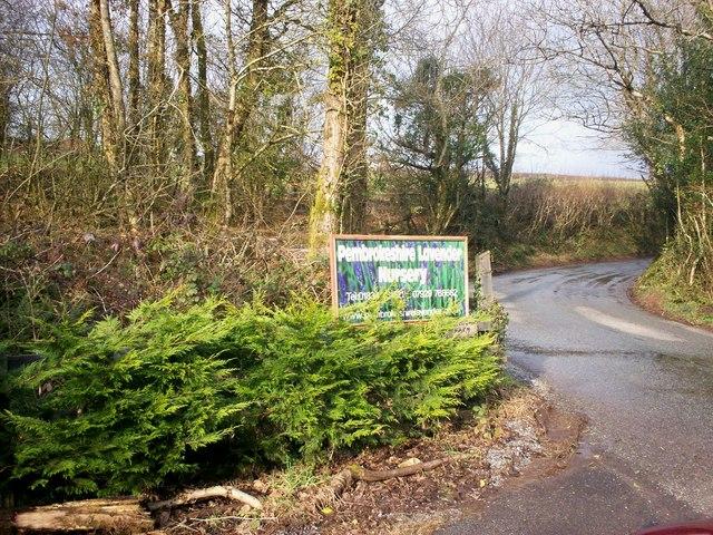 Pembrokeshire Lavender Nursery, Broomylake, Llanteg