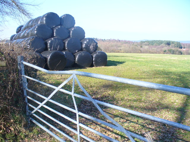 Bales by French Lane
