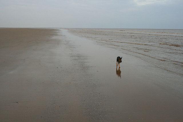 Basil on the Beach