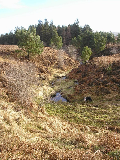 The Howdenpot Burn enters the wood of the same name