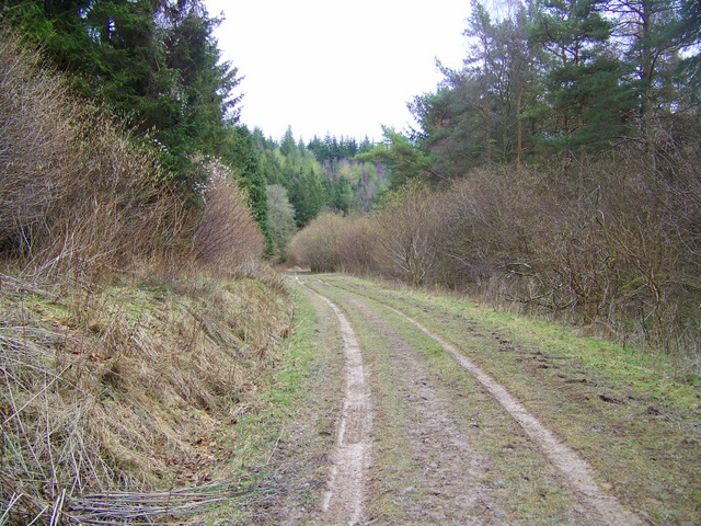 Bridleway, Ashmore Wood