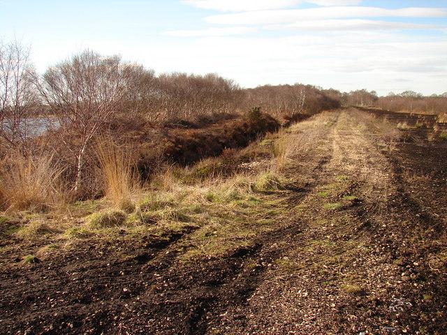 Track towards Lindholme Hall