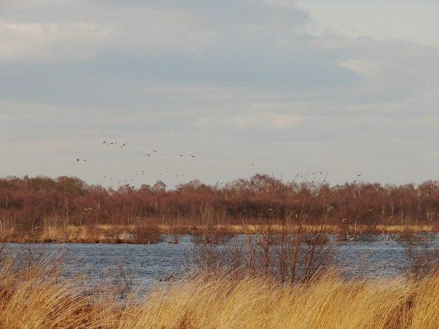 Birds on Hatfield Moors