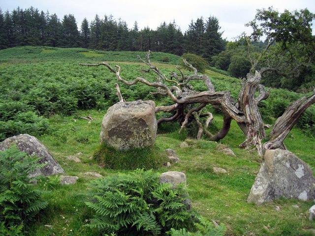 Fontburn Reservoir four poster stone circle