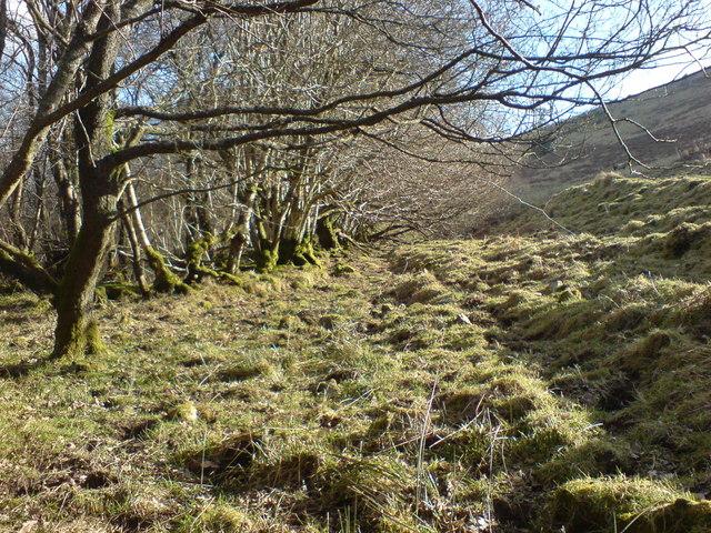 Edge of old woodland