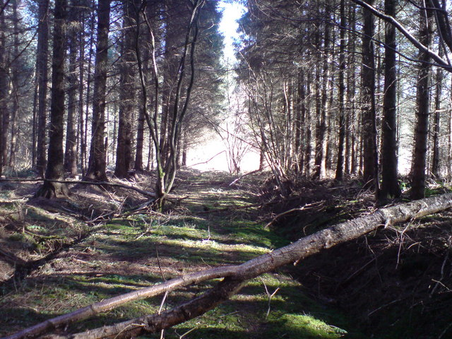 Disused forest road