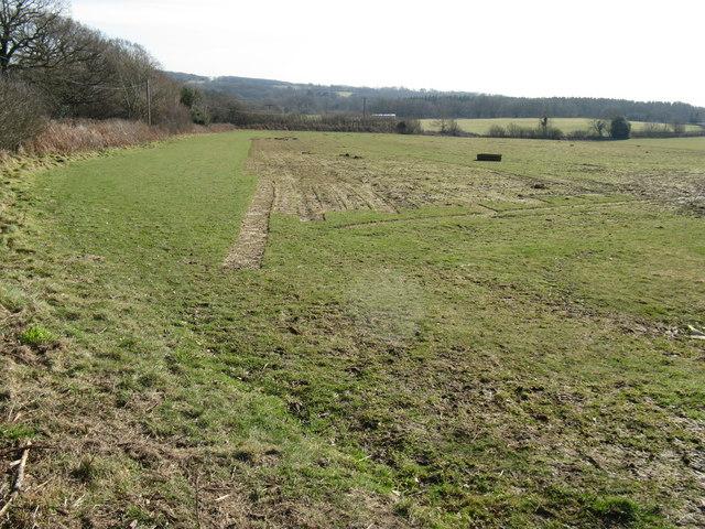 Turf cuttings on Holdens Farm