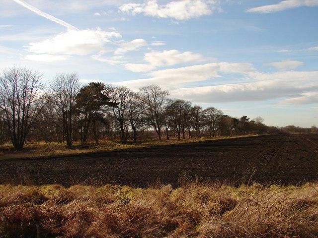 Corner of field near Lindholme Grange