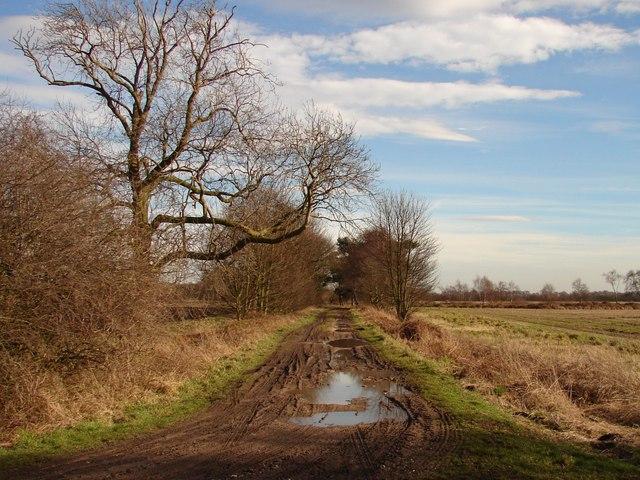 Track on Hatfield Moors
