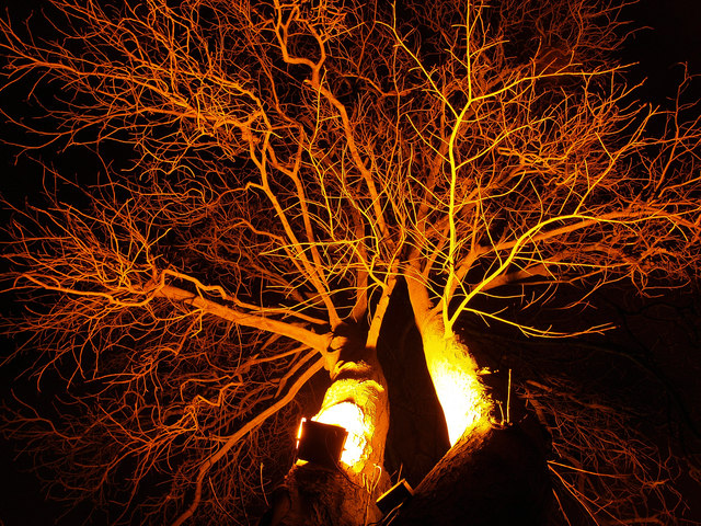 Sodium Light Lit Tree at Rogerthorpe Manor