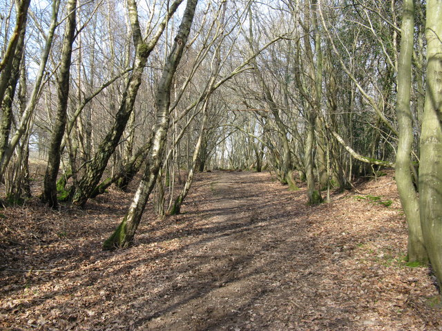 Footpath in Mill Wood