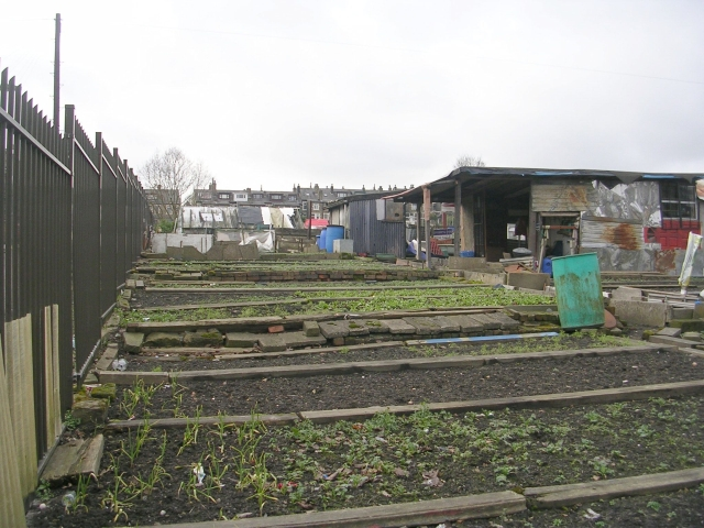 Allotments - Westfield Road