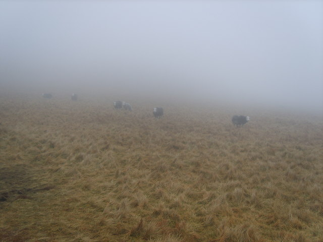 Sheep,  Illgill Head