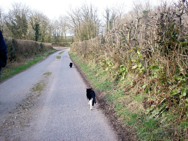 Lane to Trenewydd, Llanteg - with cats!