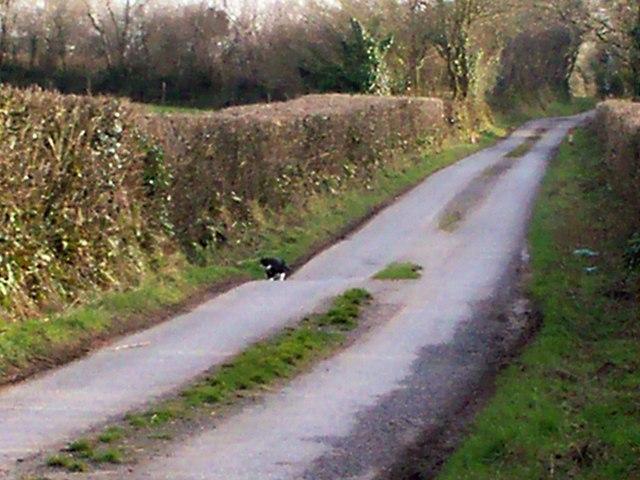 Trenewydd Lane, Llanteg - with cat!