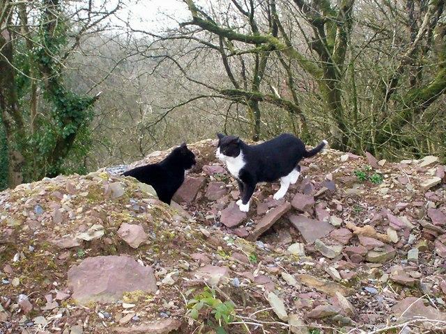 Inquisitive Cats, Top of Old Quarry, Trenewydd Lane, Llanteg
