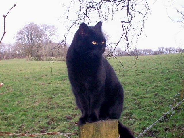 Black Cat for Luck - Mountain Park, Llanteg