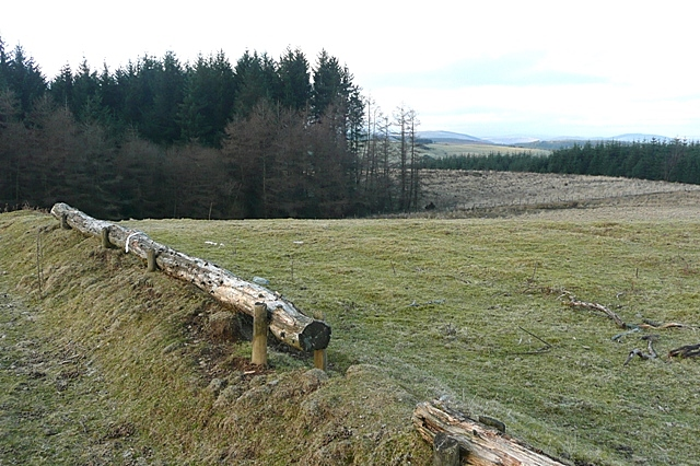 Forestry in Crychan Forest