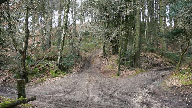 Junction of tracks below the summit of Gibbet Hill
