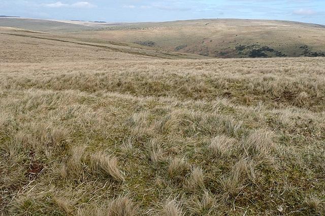 Rough grazing above Nant Cecil