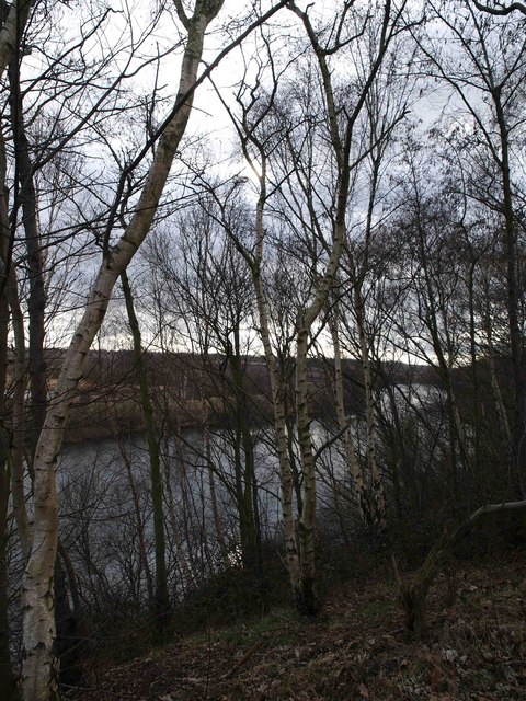 The River Aire through a forest of silver birch
