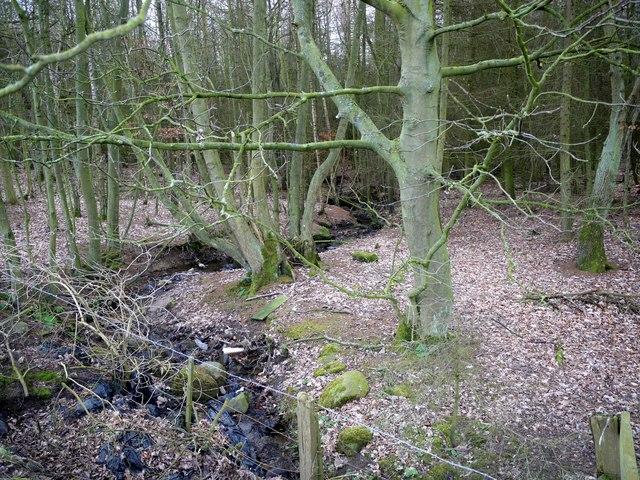 Stream enters Fox Covert on Throckley Common