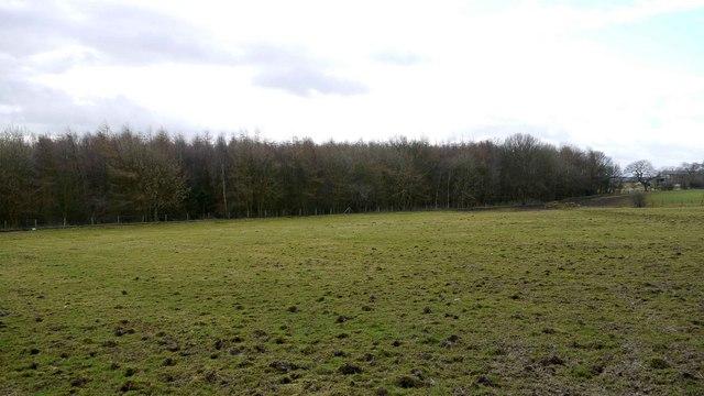 Fox Covert, Throckley Common