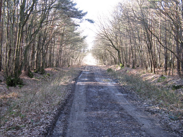 Restricted Byway in Lower Vert Wood