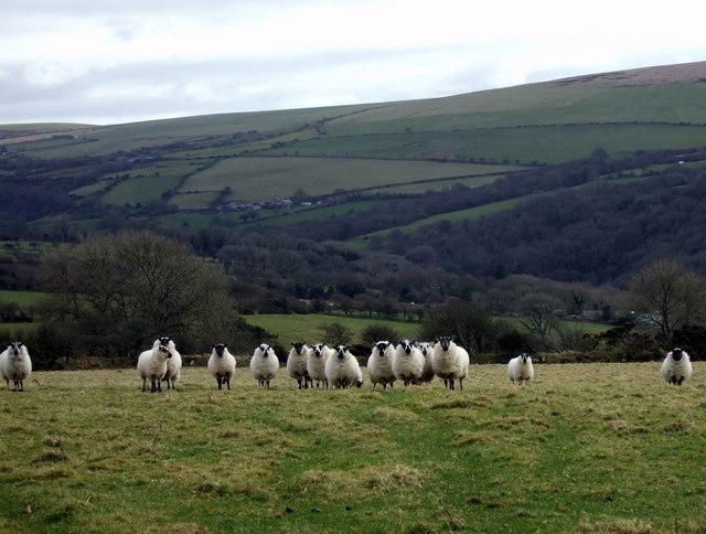 I see ewes, ewes see me