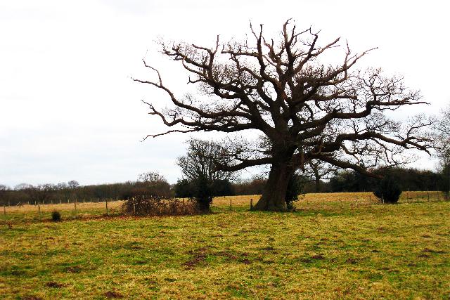 Tree near Iridge Place