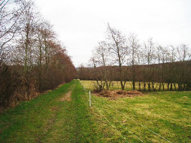Fields near Hurst Green