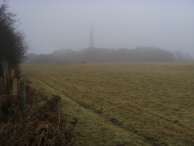 Misty Christmas Common