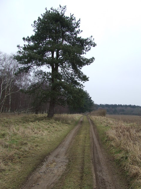 Track To Culford Heath