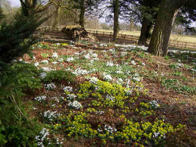 Woodland display Easton Walled Gardens