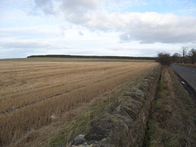 Stubble near Blackcastle