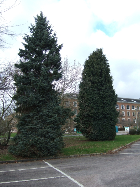 Trees in County Hall grounds, Exeter